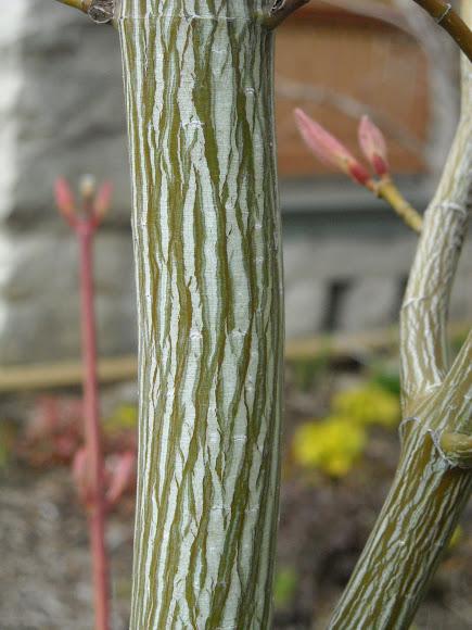 Grobe S Nursery And Garden Centre Newest Trees