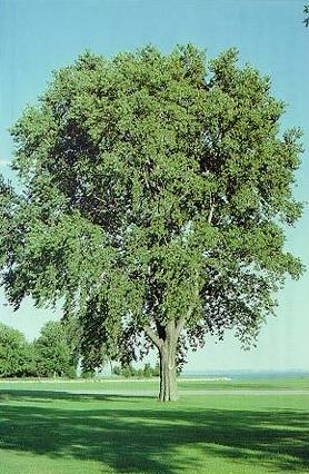 Grobe S Nursery And Garden Centre Trees4