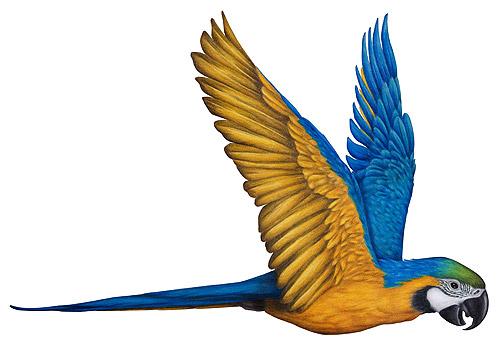 Rainforest Birds Flying Tropical Rainforest Bi...